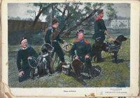 Собаки военные. Раскрашенное фото начала XX в.
