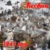 """Военно-историческая реконструкция боя """"Тихвин. Первая Победа"""""""