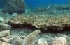 Остатки, открытые у северо-восточного побережья Делоса. Фото: Министерство культуры Греции.
