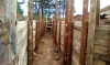 Окопы и блиндажи готовятся для реконструкции военных действий Фото: © Читатель