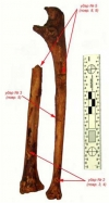 Рис. 16. Удар 2 (повреждения 3, 4), 3 (повреждение 5), 5 (повреждения 8, 9)